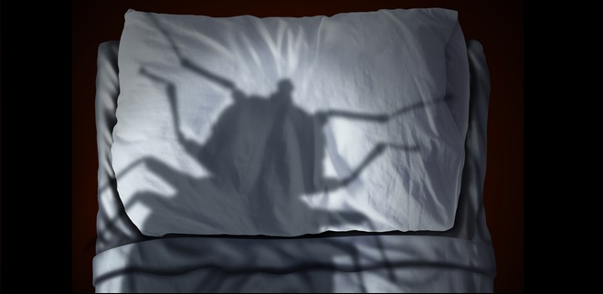 Bed Bug Fear
